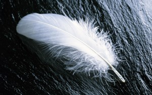 white feather - lightweight websites